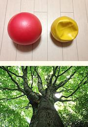 ボールと木の枝